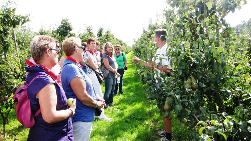 rondleiding door perenboomgaard